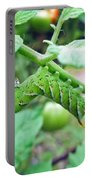 Tobacco Hornworm - Manduca Sexta - Six Spotted Hawkmoth Portable Battery Charger