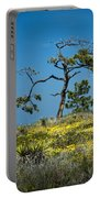 Torrey Pine On The Cliffs At Torrey Pines State Natural Reserve Portable Battery Charger