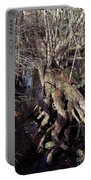 Tree Roots At The River Portable Battery Charger
