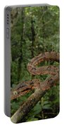 Tree Boa Portable Battery Charger by Francesco Tomasinelli