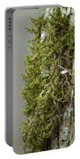 Tree Moss Closeup 2013 Portable Battery Charger