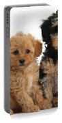 Tricolor Merle Daxie-doodle And Red Toy Portable Battery Charger