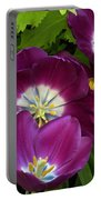 Triumph Tulips Negrita Variety Portable Battery Charger