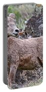Wild Bighorn Portable Battery Charger