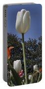 Tulips At Dallas Arboretum V36 Portable Battery Charger
