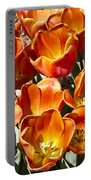 Tulips At Dallas Arboretum V80 Portable Battery Charger