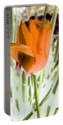 Tulips - Perfect Love - Photopower 2105 Portable Battery Charger