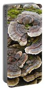 Turkey Tail Bracket Fungi -  Trametes Versicolor Portable Battery Charger