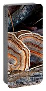 Turkey Tail Fungi In Autumn Portable Battery Charger