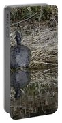 Turtles Sunning On Bank Portable Battery Charger
