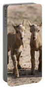 Two Aoudad Babies Playing Portable Battery Charger