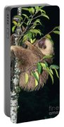 Two-toed Sloth Choloepus Didactylus Portable Battery Charger