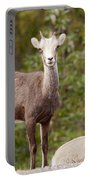 Two Young Stone Sheep Ovis Dalli Stonei Watching Portable Battery Charger