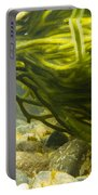 Underwater Shot Of Green Seaweed Attached To Rock Portable Battery Charger