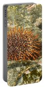 Underwater Shot Of Sea Urchin On Submerged Rocks Portable Battery Charger