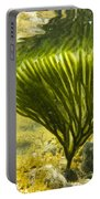 Underwater Shot Of Seaweed Plant Surface Reflected Portable Battery Charger