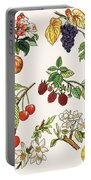 Unidentified Montage Of Fruit Portable Battery Charger