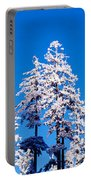 Usa, Oregon, Pine Trees, Winter Portable Battery Charger