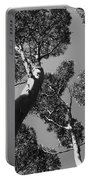 Valley Of The Giant Tingles Bw Portable Battery Charger