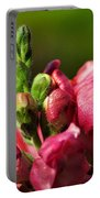 Variegated Snapdragon Portable Battery Charger