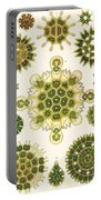 Varities Of Pediastrum From Kunstformen Der Natur Portable Battery Charger