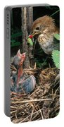 Veery At Nest Portable Battery Charger