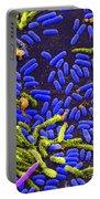 Vibrio Bacteria Sem Portable Battery Charger