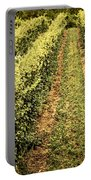 Vines Growing In Vineyard Portable Battery Charger