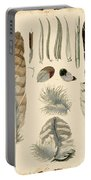 Vintage Feather Study-a Portable Battery Charger