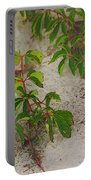 Virginia Creeper At The Beach Portable Battery Charger