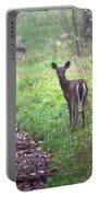 Virginia - Shenandoah National Park - White Tailed Deer Portable Battery Charger
