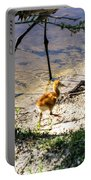 Walking Around The Lake Portable Battery Charger