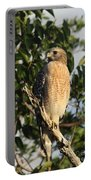 Watchful Eyes - Red Shouldered Hawk Portable Battery Charger