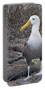 Waved Albatross Diomeda Irrorata Portable Battery Charger