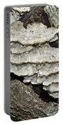 Weep No More My Baby - Bracket Fungi - Tyromyces Balsamea Portable Battery Charger
