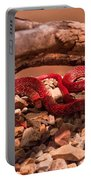 Western Coachwhip Red Phase Portable Battery Charger