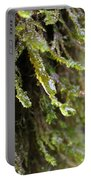 Wet Redwood Branches Portable Battery Charger