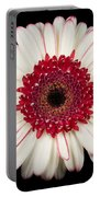 White And Red Gerbera Daisy Portable Battery Charger