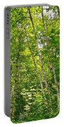White Birch Along Rivier Du Nord Trail In The Laurentians-qc Portable Battery Charger