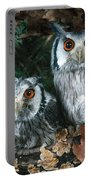 White Faced Scops Owl Portable Battery Charger