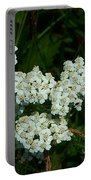 White Flowers In Green Field Portable Battery Charger