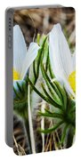 White Pasque Flower Portable Battery Charger