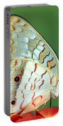 White Peacock Butterfly Anartia Portable Battery Charger