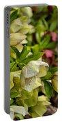 White/pink Lenten Roses Portable Battery Charger