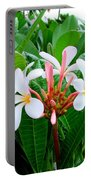 White Plumeria In Foliage Portable Battery Charger