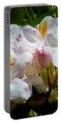 White Rhododendron In Sunlight Portable Battery Charger