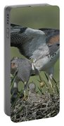 White-tailed Hawks At Nest Portable Battery Charger