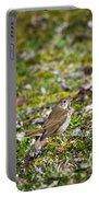 Wild Birds Hermit Thrush Portable Battery Charger