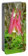 Wild Columbine - Aquilegia Canadensis Portable Battery Charger