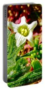 Wild Cucumber In Park Sierra Near Coarsegold-california  Portable Battery Charger